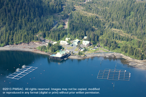 Aerial view of a Prince William Sound Aqua Culture Facility
